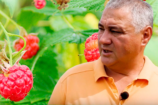«Думаем иоМоскве, атам цены другие»: малиново-клубничный рай вБуинском районе