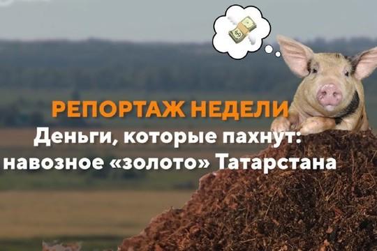 Репортаж недели. Деньги, которые пахнут: навозное «золото» Татарстана