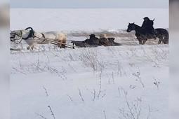 В Кукморском районе снимают сцену ссылки в Сибирь для фильма о Зулейхе