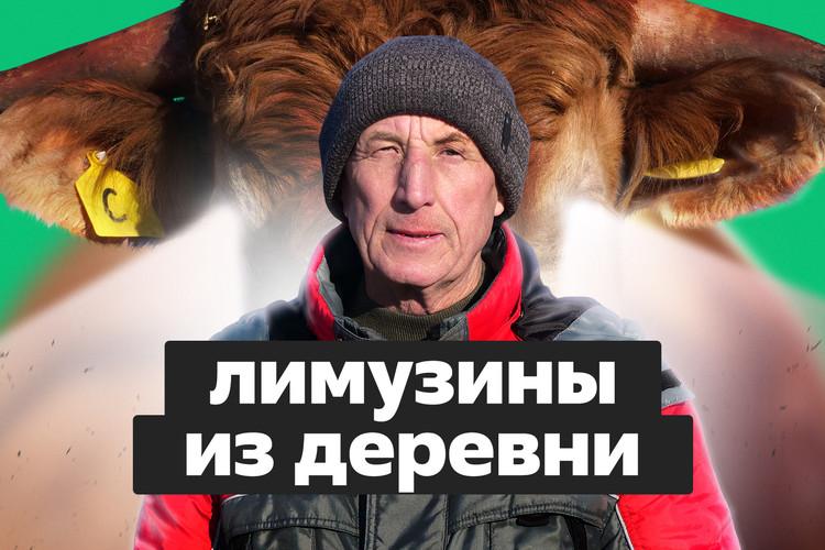 Быки-лимузины. Фермер из Татарстана сделал бизнес на необычной породе?