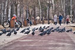 Как Казань пережила «последний день свободы»