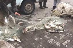 В Татарстане задержали браконьеров, выловивших более 500 рыб: им грозит до 5 лет лишения свободы