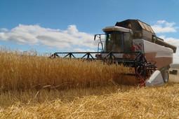 Долги «Золотого колоса» утянули «Ак барс Холдинг» на самое дно по урожайности