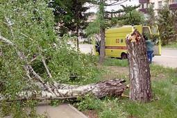 В Альметьевске упавшее дерево придавило детей. Есть пострадавшие