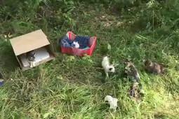 В овраг у кладбища в Елабуге выбросили более 30 полуживых кошек и котят