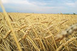 Ляля Кудерметова: «Россельхозбанк уделяет особое внимание финансированию сезонных работ»