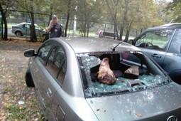 Свиные головы и разбитое авто: как в Москве объявили войну депутатам-активистам