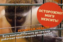 Есть контакт? Почему до сих пор работают трогательные зоопарки? # Репортаж недели