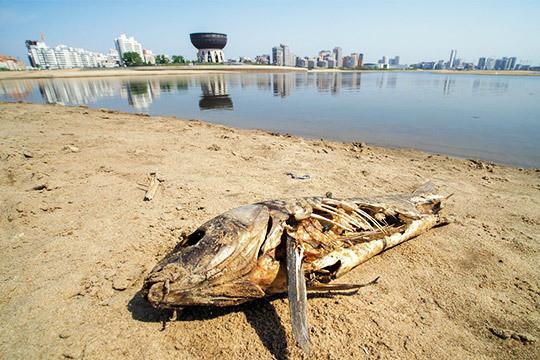 «Победить природу очень трудно…»: кто виноват вэкологической катастрофе наВолге?