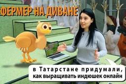 Индюшки-online: как скрестить IT-стартап ифермерское хозяйство