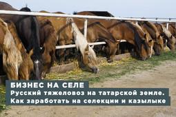 Бизнес на селе #40. Русский тяжеловоз на татарской земле. Как заработать на селекции и казылыке