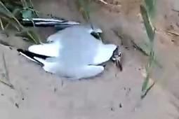 В Победилово на берег Волги выбросило мертвую рыбу и чаек