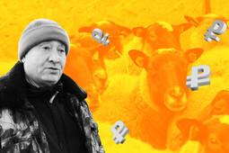 Бизнес на селе: овцы Петра I на родине Тукая
