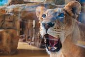 Зоопарк «Река Замбези» готовится к возобновлению работы