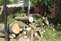 В казанском парке Горького рабочие спиливают деревья под парковку