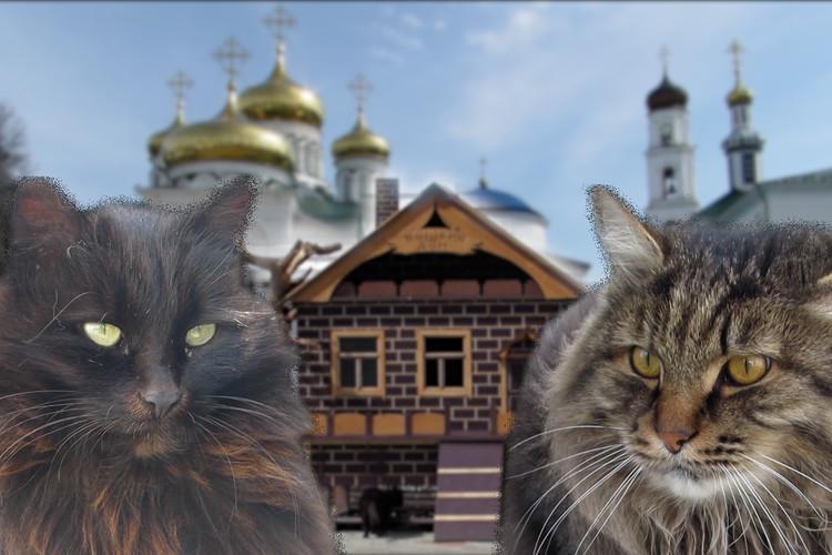 Домик для кошек появился в Раифском монастыре