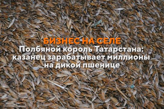 Бизнес на селе #37. Как татарстанец возродил в России полбу и стал миллионером
