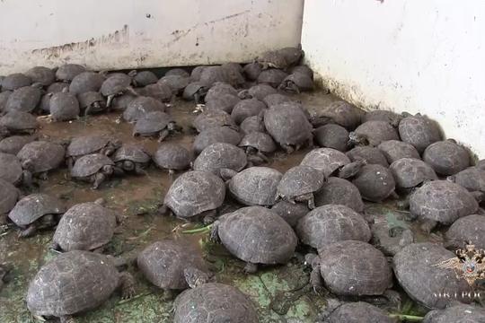 В Оренбургской области полицейские больше месяца выхаживали 4 тыс. черепах