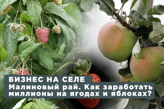 Малиновый рай. Как заработать миллионы на ягодах и яблоках?