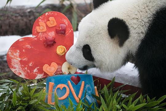 Каждому животному по вкусной валентинке: как в Московском зоопарке отметили День всех влюбленных