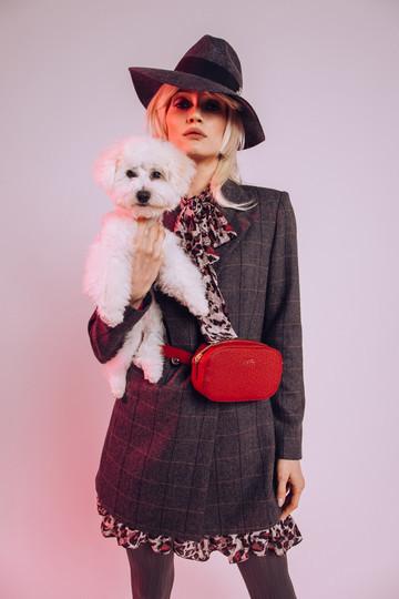 Модный бутик пригласил на фотосессию песика французско-бельгийской породы