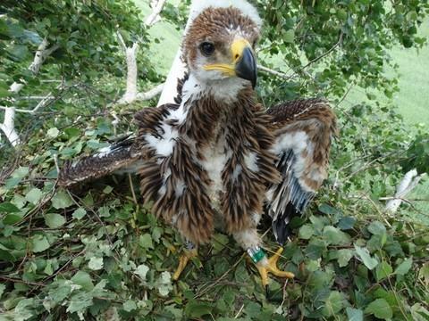 В нацпарке «Нижняя Кама» сокращается число орланов – виноваты суслики
