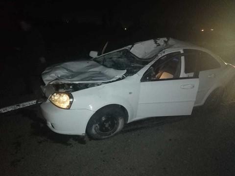 В Елабужском районе иномарка насмерть сбила лося – пострадал пассажир авто
