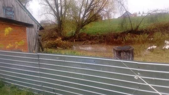 В Татарстане жители села пожаловались на бобров, устроивших запруду на реке
