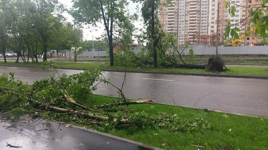 11 погибших, 50 раненых и600 поваленных деревьев— циклон в столицеРФ