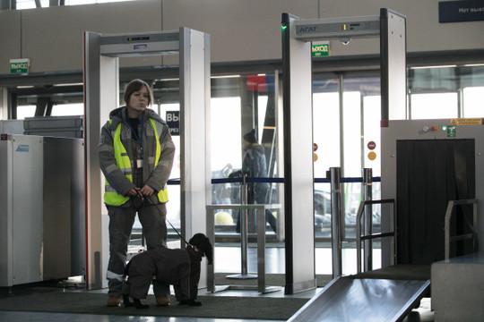 Эксперт рассказал, как собаки учатся распознавать зараженных COVID-19
