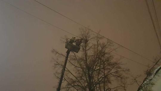В Казани сотрудники МЧС сняли с дерева енота