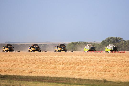 Урожай пшеницы в нынешнем году составит приблизительно 64,4 млн т— Минсельхоз