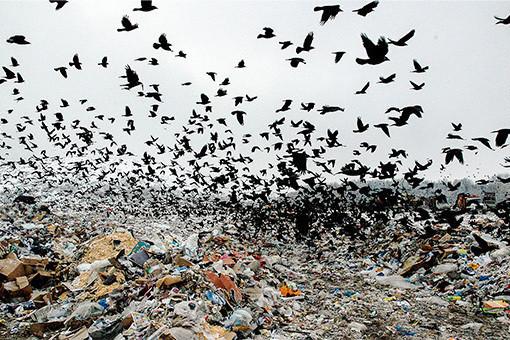 ВКазани откроют завод посжиганию мусора ивыработке электрической энергии