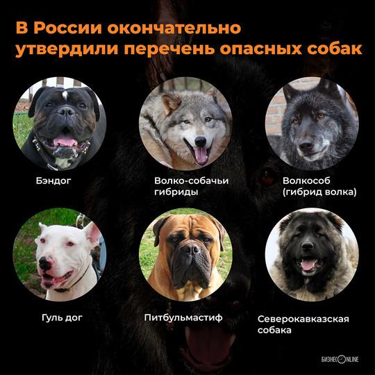В России окончательно утвердили перечень опасных собак – в него вошли 12 пород