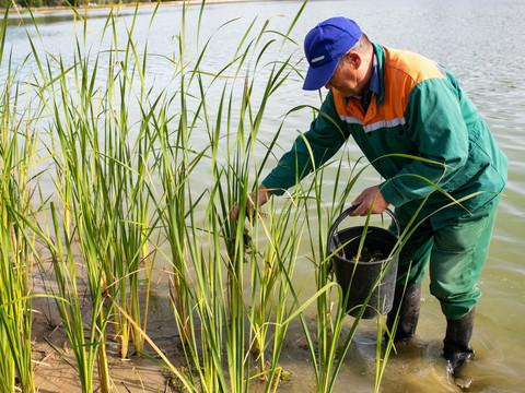 На Большом Лебяжьем озере в Казани для эксперимента высадили краснокнижное растение