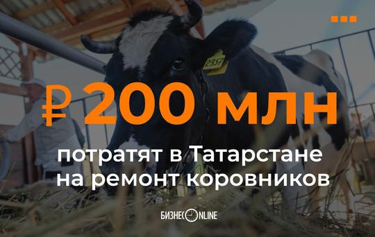 В Татарстане на ремонт 155 коровников потратят почти 200 млн рублей