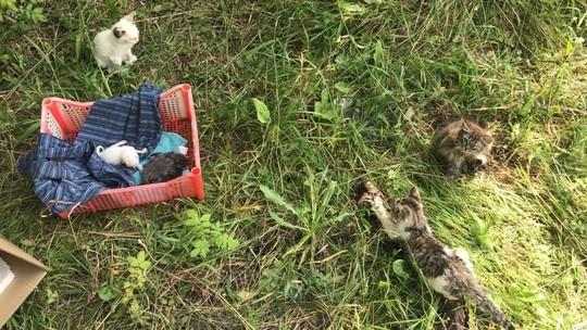 Грибники нашли в овраге у кладбища в Елабуге больше 30 полуживых кошек и котят