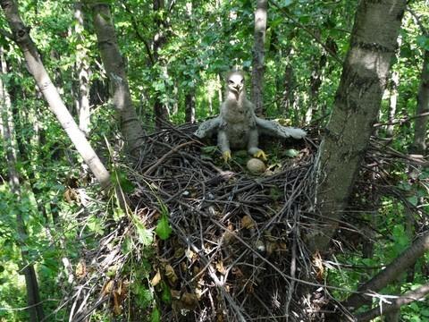Из-за холодного лета в Татарстане замедлилось развитие птенцов хищных птиц