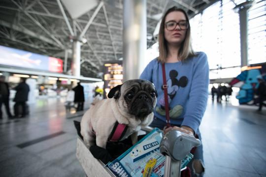 Клиенты «Аэрофлота» жалуются наотмену части рейсов вТурцию с1августа