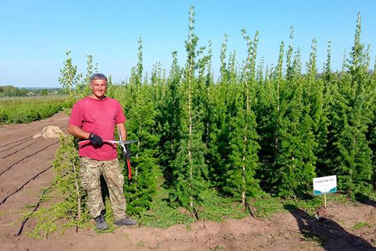«За выкопку дерева из леса можно получить реальный срок, поэтому желающих рискнуть все меньше»