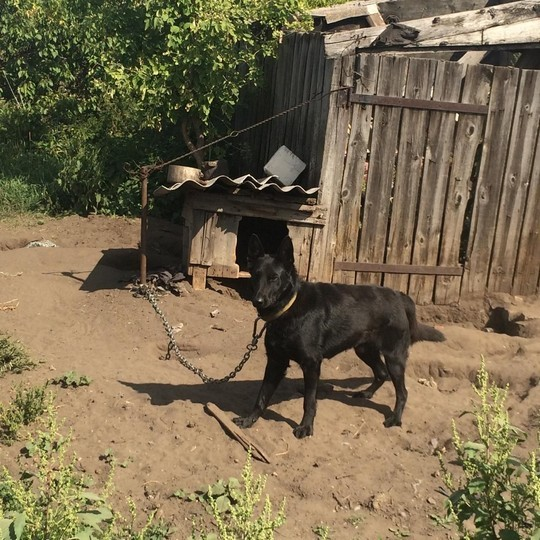 В Волгоградской области собака загрызла младенца во дворе частного дома