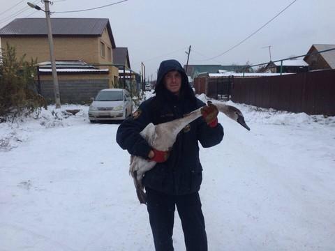 Татарстанские cотрудники экстренных служб вызволили из«ледового плена» 3-х лебедей вБорисково