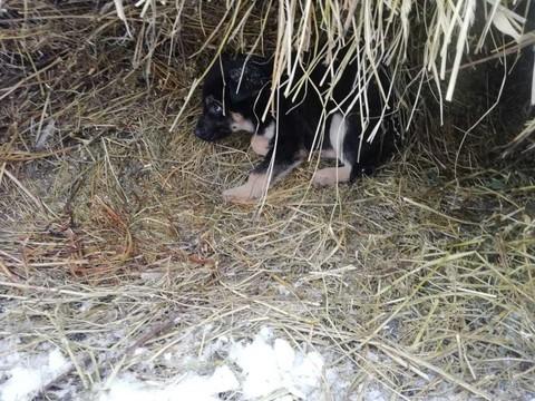 Житель Елабуги расстрелял бездомных щенков – они слишком громко лаяли