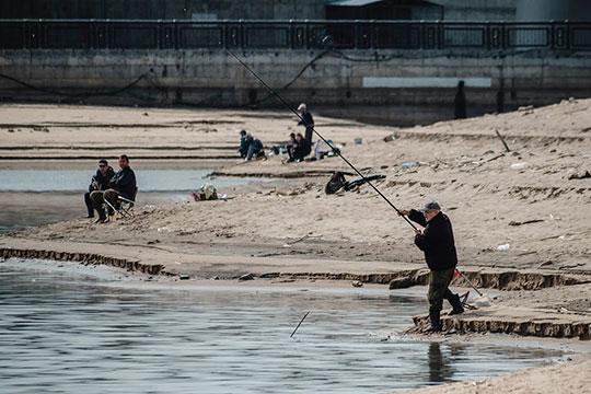 Низкий уровень воды в водохранилище губителен в первую очередь для рыбы, мечущей икру в камышах
