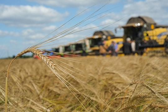 Валовый сбор зерна по району составил 35749 тонн. Средняя урожайность — 25,1 центнера с гектара (19 ц/га — в 2018)