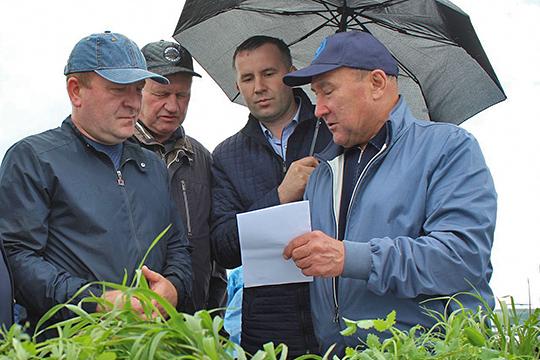 «31 год такого не было!»: дожди тормозят уборку хлеба в Татарстане