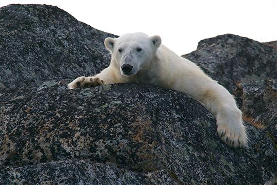 «Сегодня мыживем впериод такого исторического потепления, называемый голоценом. Голоцен— это современный геологический период, который длится уже более десяти тысяч лет, ипик этого потепления уже прошел»