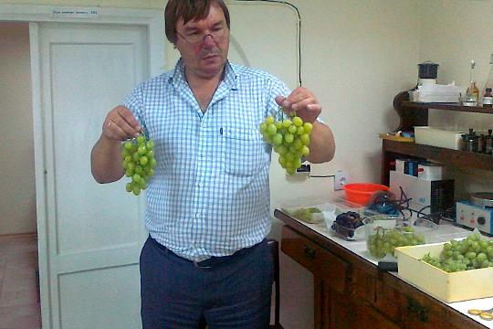 Владимир Лиховской пояснил, что в селе Вилино планируется построить большой комплекс для производства отечественных саженцев винограда в необходимом для страны количестве