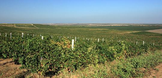 Бахчисарайский район считается одним из лучших для выращивания винограда в Крыму