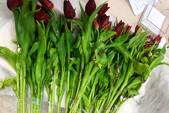 Полмиллиона гнилых тюльпанов: казанских цветочных магнатов кинули москвичи